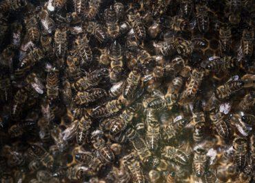 fleißige Theresienhof Bienen ;)